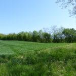 Haie champêtre pluristrate- Arbres & Paysages Tarnais