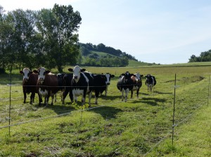 Agroforesterie Tarn