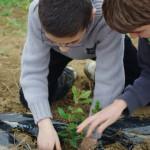 Ecoles Arbres et Paysages Tarnais