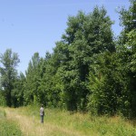 Haie champêtre pluristrate - Arbres & Paysages Tarnais