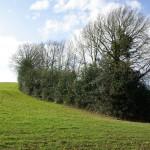 Haie naturelle-Arbres & Paysages Tarnais