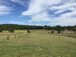 Agroforesterie - Arbres & Paysages Tarnais
